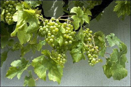 Weingut Uwe Geßner, Garstadt